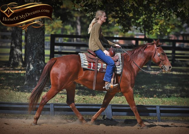 011-Phoenix-Sorrel-AQHA-gelding-for-sale