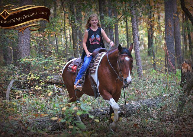 011-Rambo-Bay-Tobiano-APHA-Roping-Heeling-Gelding-Horse-For-Sale