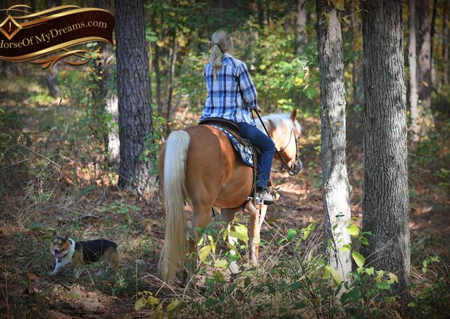 011-Val-AQHA-Golden-Palomino-For-Sale