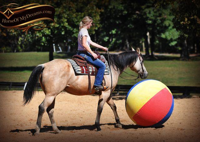 012-Buck-AQHA-Buckskin-gelding-for-sale
