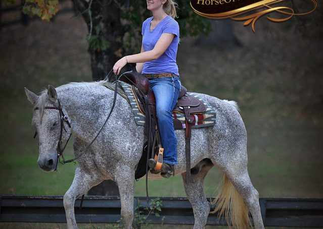012-Ike-Grey-AQHA-gelding-for-sale