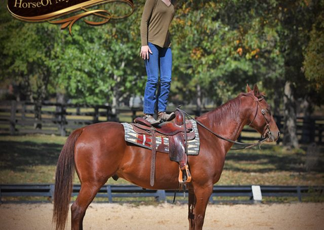 012-Phoenix-Sorrel-AQHA-gelding-for-sale