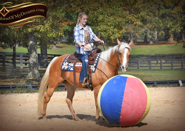 012-Val-AQHA-Golden-Palomino-For-Sale