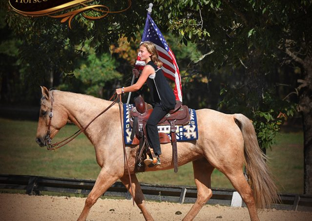013-Frankie-AQHA=Palomino-Quarter-Horse-Western-Pleasure-for-sale