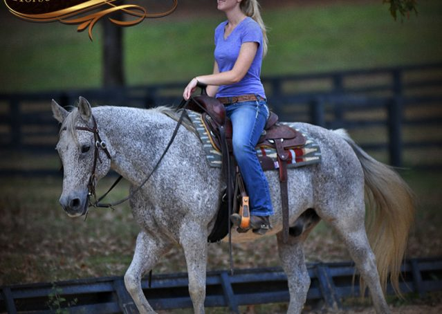 013-Ike-Grey-AQHA-gelding-for-sale