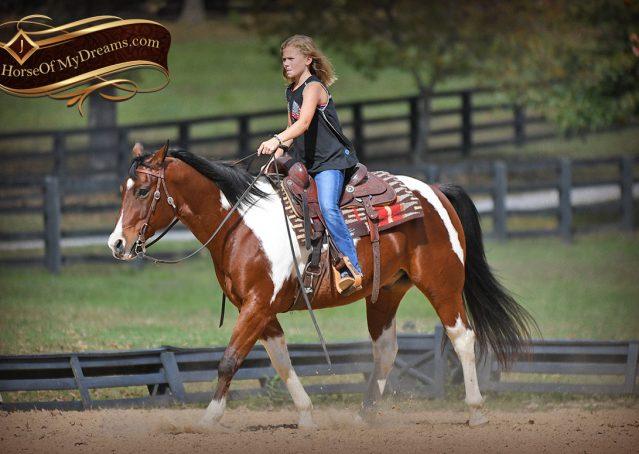 013-Rambo-Bay-Tobiano-APHA-Roping-Heeling-Gelding-Horse-For-Sale