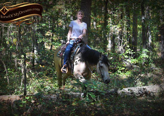 014-Buck-AQHA-Buckskin-gelding-for-sale
