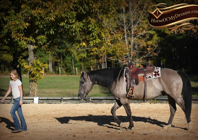 014-Dakota-AQHA-Grullo-Grulla-Gelding-For-Sale