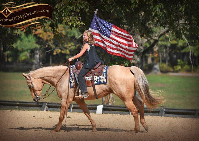 014-Frankie-AQHA=Palomino-Quarter-Horse-Western-Pleasure-for-sale