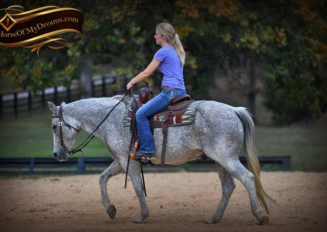 014-Ike-Grey-AQHA-gelding-for-sale