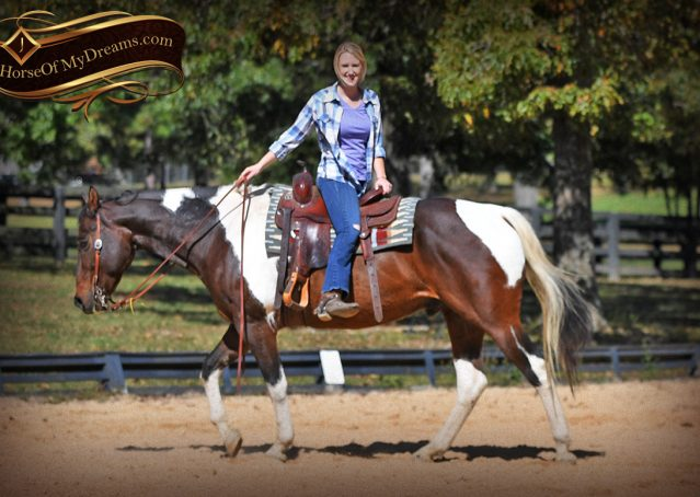 014-Nick-Bay-Tobiano-APHA-gelding-for-sale