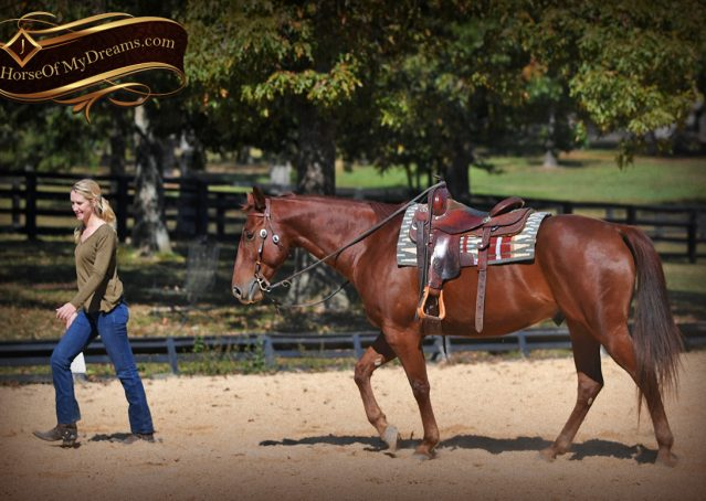 014-Phoenix-Sorrel-AQHA-gelding-for-sale
