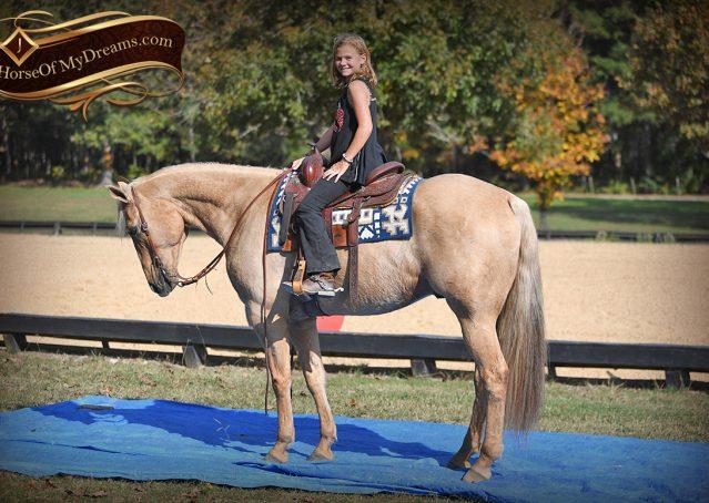 015-Frankie-AQHA=Palomino-Quarter-Horse-Western-Pleasure-for-sale