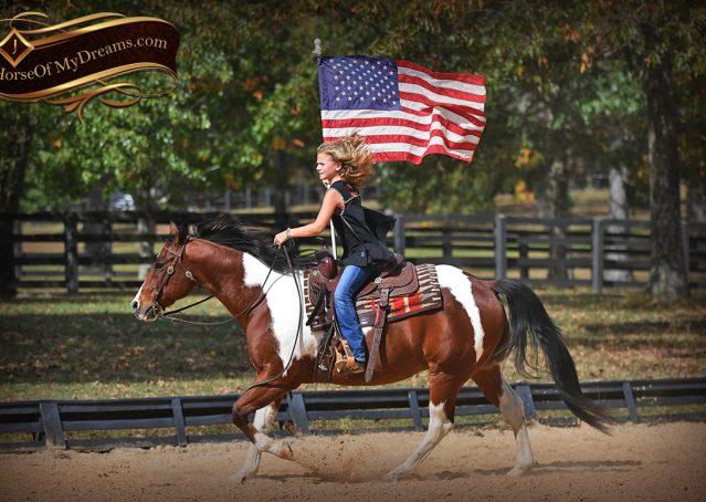 015-Rambo-Bay-Tobiano-APHA-Roping-Heeling-Gelding-Horse-For-Sale