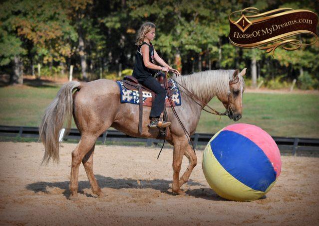 016-Frankie-AQHA=Palomino-Quarter-Horse-Western-Pleasure-for-sale