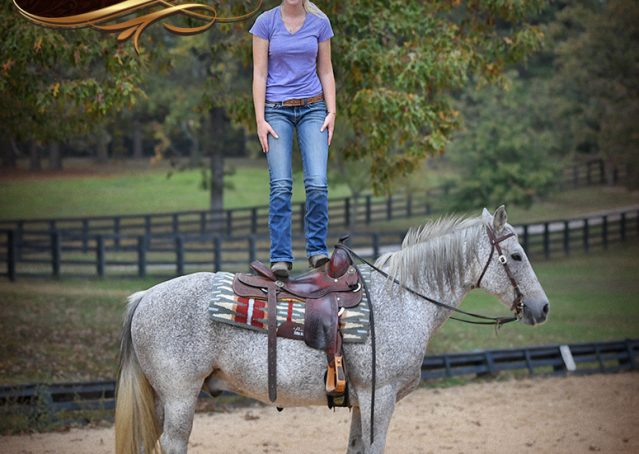 016-Ike-Grey-AQHA-gelding-for-sale