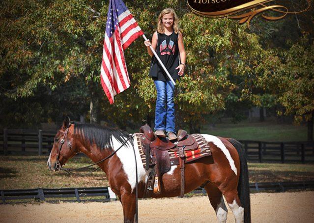 016-Rambo-Bay-Tobiano-APHA-Roping-Heeling-Gelding-Horse-For-Sale