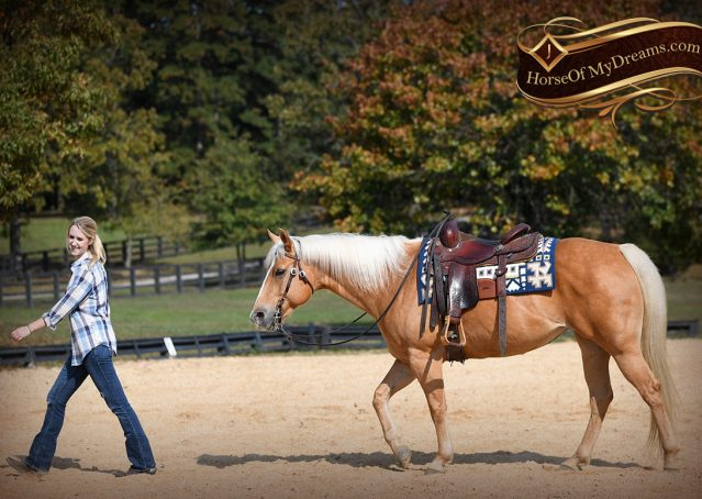 016-Val-AQHA-Golden-Palomino-For-Sale
