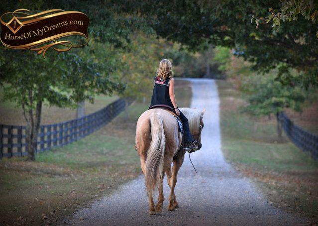 017-Frankie-AQHA=Palomino-Quarter-Horse-Western-Pleasure-for-sale