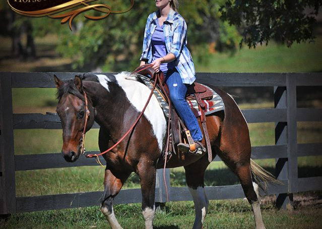 017-Nick-Bay-Tobiano-APHA-gelding-for-sale