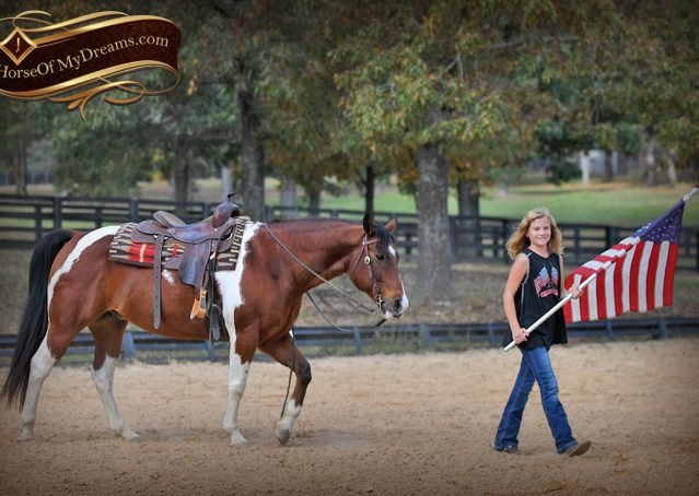 017-Rambo-Bay-Tobiano-APHA-Roping-Heeling-Gelding-Horse-For-Sale