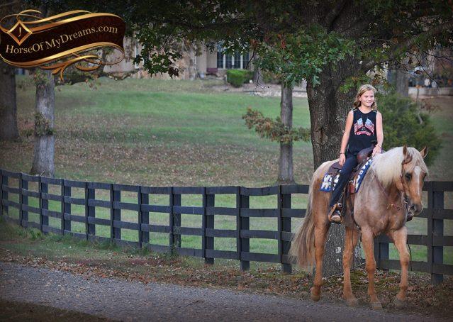 018-Frankie-AQHA=Palomino-Quarter-Horse-Western-Pleasure-for-sale