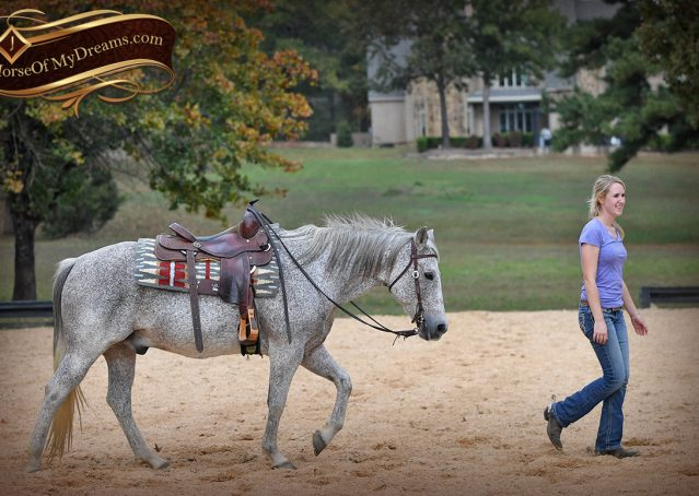 018-Ike-Grey-AQHA-gelding-for-sale