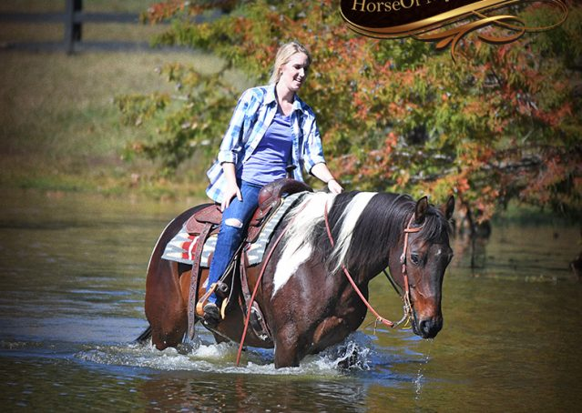 018-Nick-Bay-Tobiano-APHA-gelding-for-sale