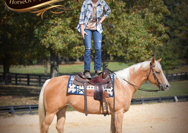 018-Val-AQHA-Golden-Palomino-For-Sale