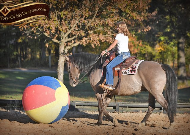 019-Dakota-AQHA-Grullo-Grulla-Gelding-For-Sale