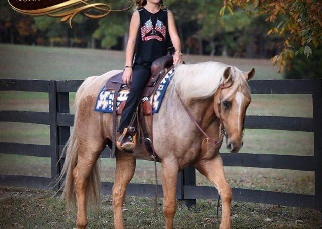 019-Frankie-AQHA=Palomino-Quarter-Horse-Western-Pleasure-for-sale