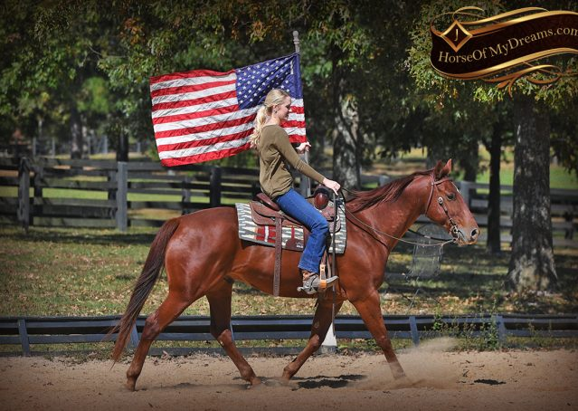 019-Phoenix-Sorrel-AQHA-gelding-for-sale