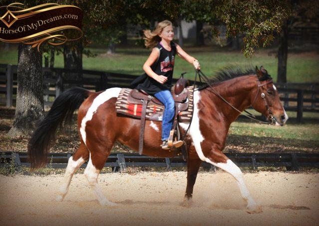 019-Rambo-Bay-Tobiano-APHA-Roping-Heeling-Gelding-Horse-For-Sale