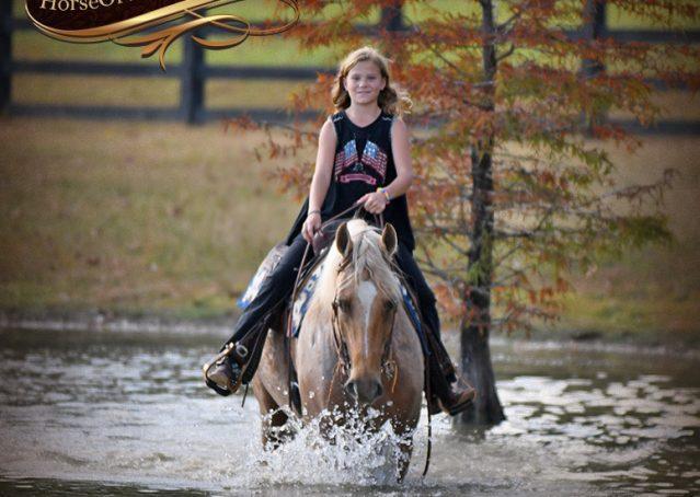 020-Frankie-AQHA=Palomino-Quarter-Horse-Western-Pleasure-for-sale