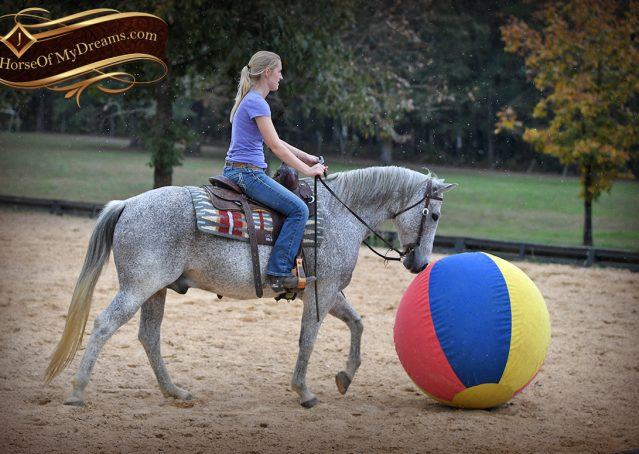 020-Ike-Grey-AQHA-gelding-for-sale
