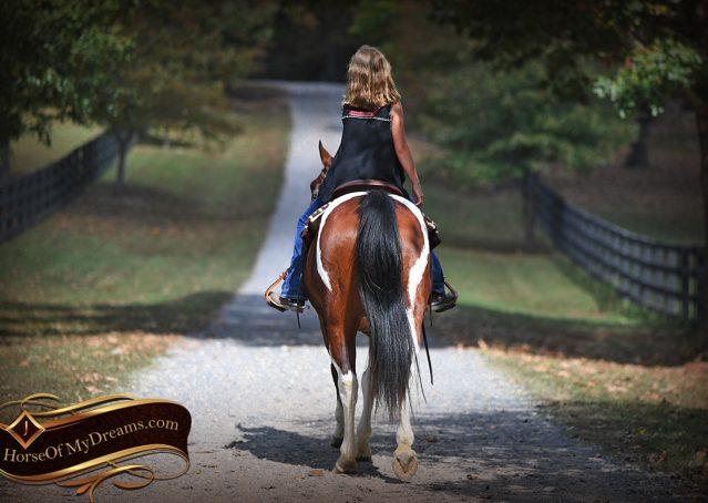 020-Rambo-Bay-Tobiano-APHA-Roping-Heeling-Gelding-Horse-For-Sale