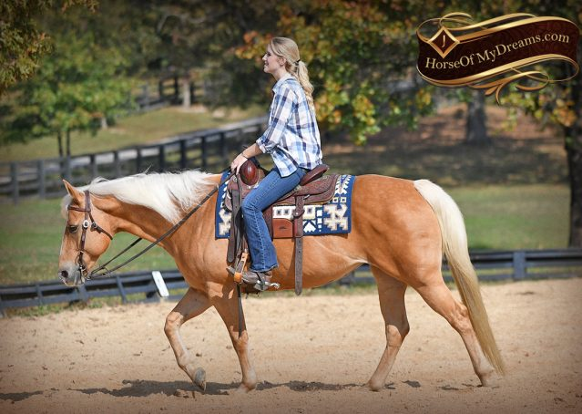 020-Val-AQHA-Golden-Palomino-For-Sale