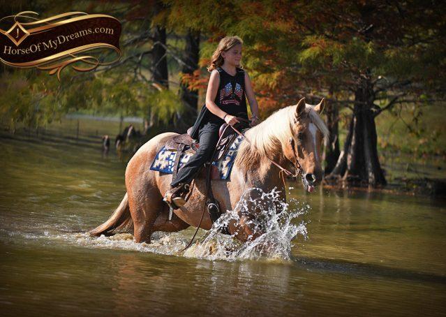 021-Frankie-AQHA=Palomino-Quarter-Horse-Western-Pleasure-for-sale
