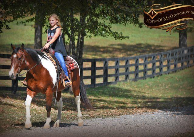 021-Rambo-Bay-Tobiano-APHA-Roping-Heeling-Gelding-Horse-For-Sale