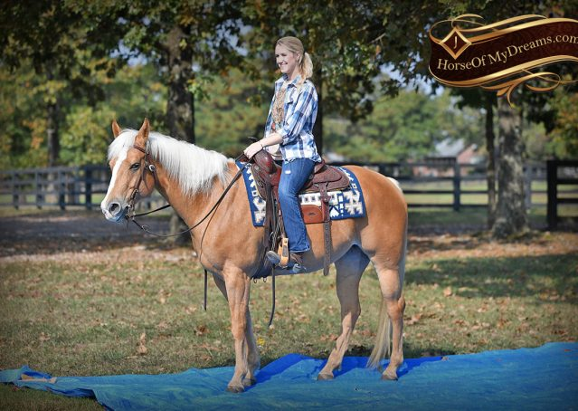 021-Val-AQHA-Golden-Palomino-For-Sale