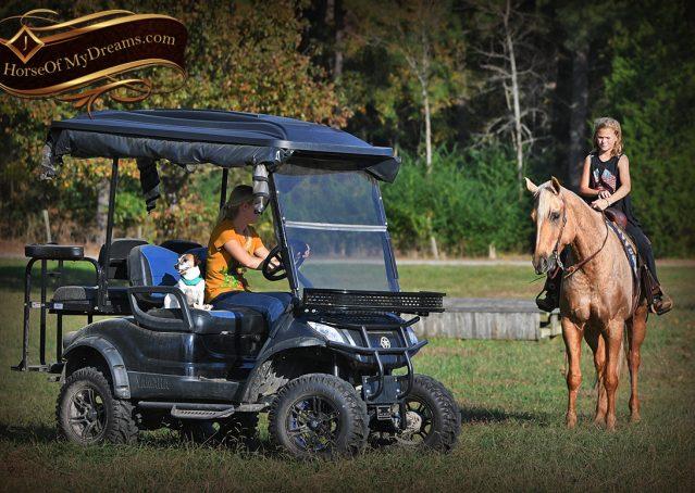 022-Frankie-AQHA=Palomino-Quarter-Horse-Western-Pleasure-for-sale