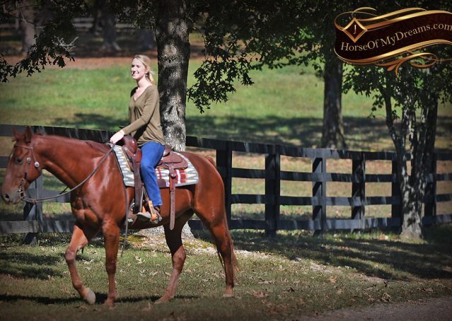 022-Phoenix-Sorrel-AQHA-gelding-for-sale