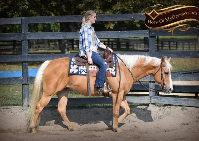 022-Val-AQHA-Golden-Palomino-For-Sale