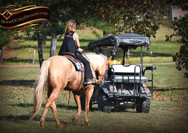 023-Frankie-AQHA=Palomino-Quarter-Horse-Western-Pleasure-for-sale