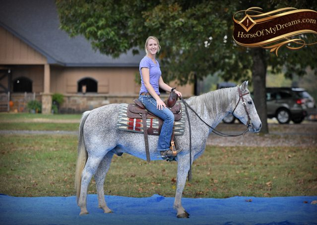 023-Ike-Grey-AQHA-gelding-for-sale