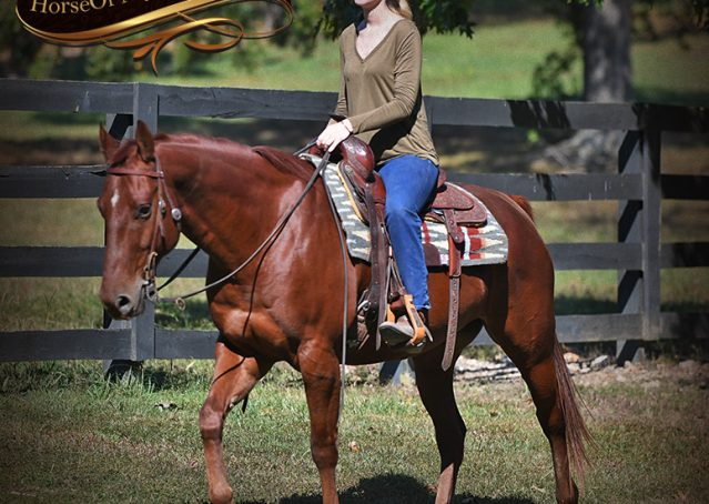 023-Phoenix-Sorrel-AQHA-gelding-for-sale