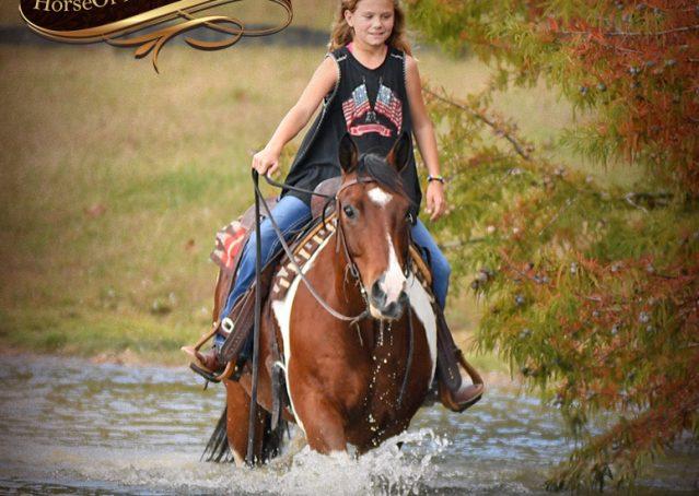 023-Rambo-Bay-Tobiano-APHA-Roping-Heeling-Gelding-Horse-For-Sale