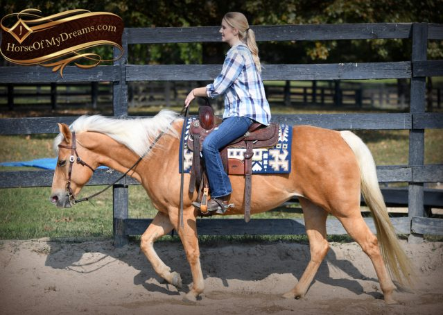 023-Val-AQHA-Golden-Palomino-For-Sale