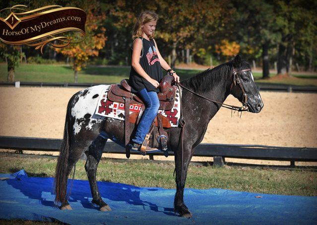 024-Applejack-Flashy-POA-kids-pony-gelding-for-sale