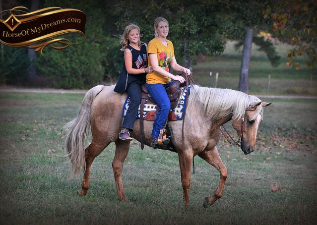 024-Frankie-AQHA=Palomino-Quarter-Horse-Western-Pleasure-for-sale
